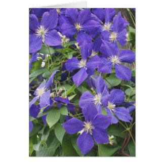 CLEMATIS, BLUE NOTE CARD