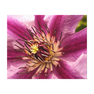 Clematis Stretched Canvas Print