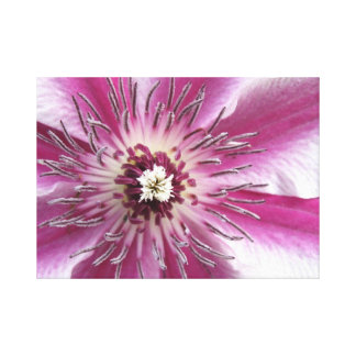 Clematis Gallery Wrapped Canvas
