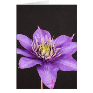 clematis greeting cards