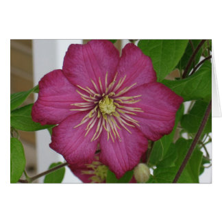 Clematis Note Card