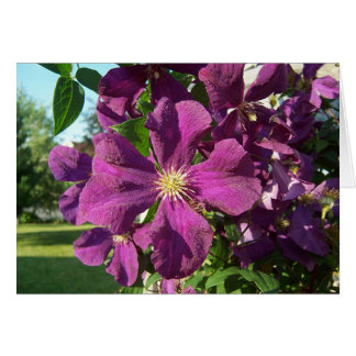 Clematis Cards