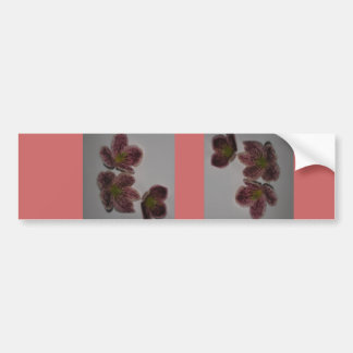 Clematis  card bumper sticker