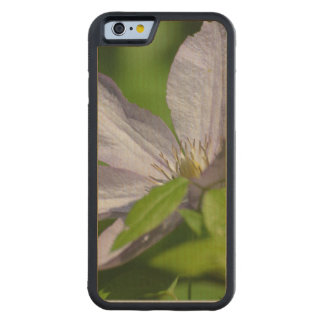 Clematis Carved® Maple iPhone 6 Bumper Case