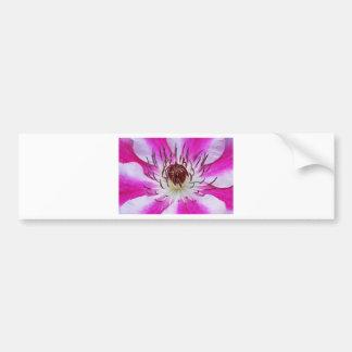 Clematis Flowers Flower Plant Garden Bumper Stickers