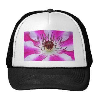 Clematis Flowers Flower Plant Garden Hat