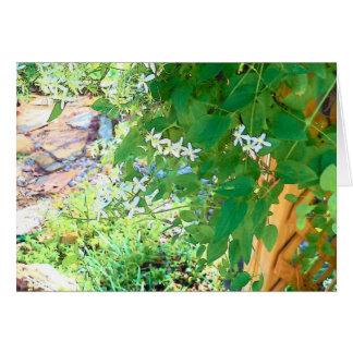 Clematis Garden Note Card