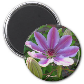 Clematis Gift Magnet