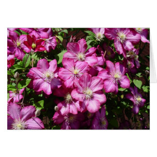 Clematis in Bloom Card