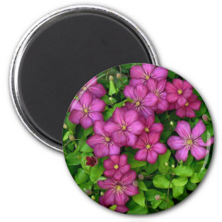 Clematis Magnet