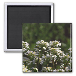Clematis Refrigerator Magnets