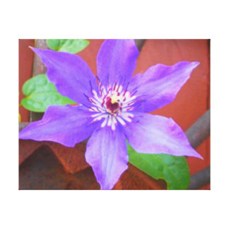 Clematis on Redwood Stretched Canvas Print
