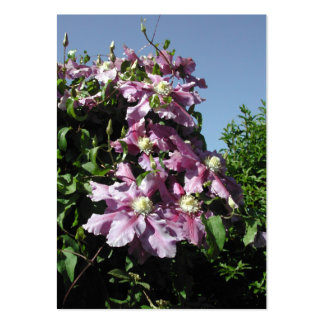 Clematis. Pink Flowers, and blue sky. Business Card Templates