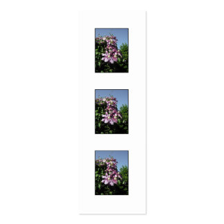 Clematis. Pink Flowers, and blue sky. Business Cards