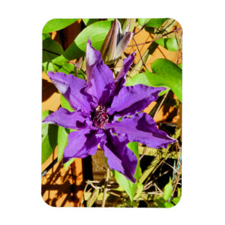 CLEMATIS RECTANGLE MAGNETS