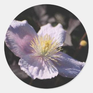 Clematis Round Sticker