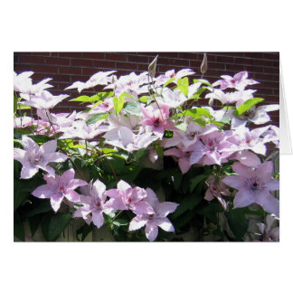 Clematis Vine Greeting Cards