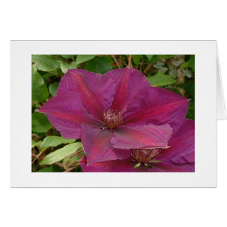 Clematis viticella greeting card