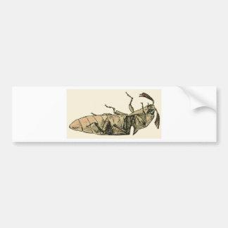 Click Beetle Bumper Sticker