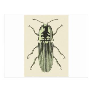 Click Beetle Postcard