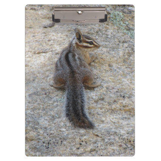 Cliff Chipmunk on a Rock Clipboard