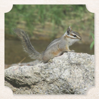 Cliff Chipmunk Paper Coaster