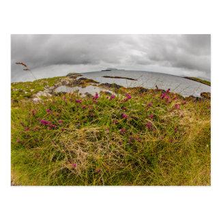 """Cliff top flower, Ireland"" postcards"