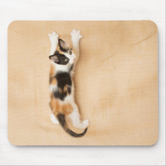 Climbing Calico Kitten Mouse Pad