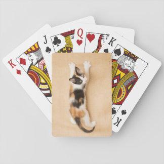 Climbing Calico Kitten Playing Cards
