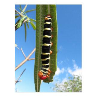 Climbing Caterpillar Postcard