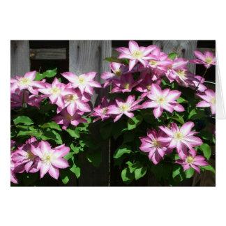 Climbing Clematis Spring Flowers Greeting Card