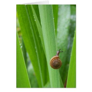 Climbing Garden Snail Note card