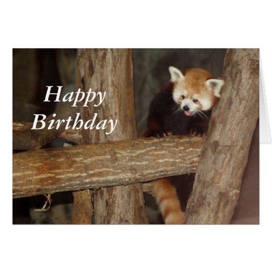 Climbing Panda Birthday Card