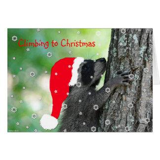 Climbing Raccoon Christmas Card
