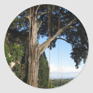 Climbing ropes hanging from a big tree classic round sticker