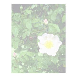 Climbing Rose Mermaid flowers Custom Letterhead
