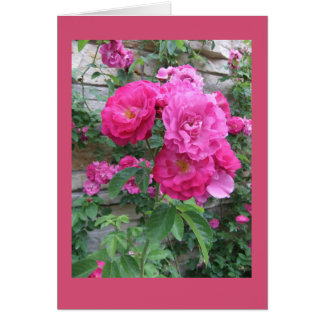 Climbing Rose on Rocky Wall Card