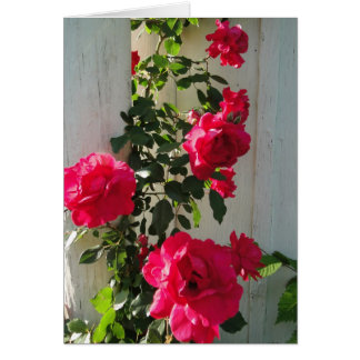 Climbing Roses Red, Sympathy Card