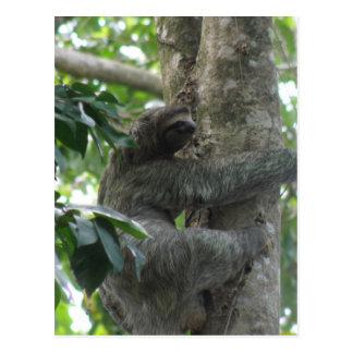 Climbing Sloth Postcard
