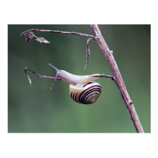 Climbing snail postcard