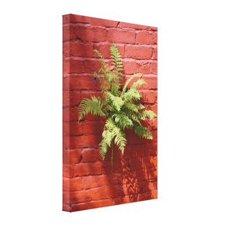 Clinging On Fern Canvas Print