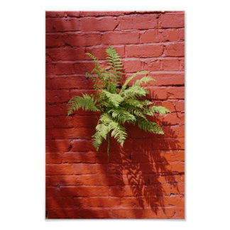 Clinging On Fern Poster