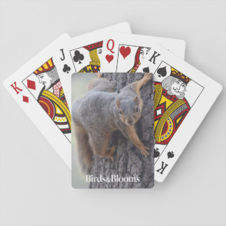 Clinging Squirrel Playing Cards