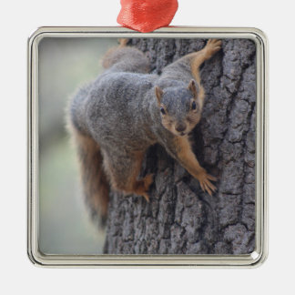 Clinging Squirrel Silver-Colored Square Ornament