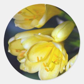 Clivia's Abundance Round Sticker