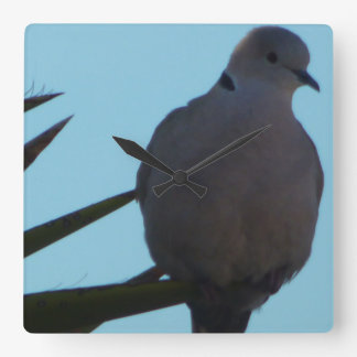 clock Mourning dove