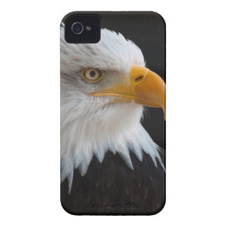 Close Photography of Bald Eagle iPhone 4 Case-Mate Case