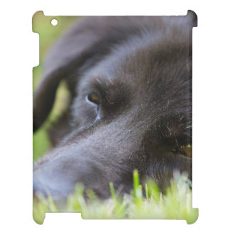 Close Up Black old dogs face with selective focus iPad Cases