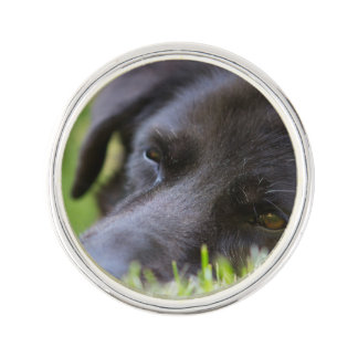 Close Up Black old dogs face with selective focus Lapel Pin