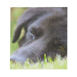 Close Up Black old dogs face with selective focus Notepad